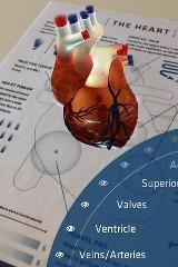 Augmented Reality app: Anatomy 4D